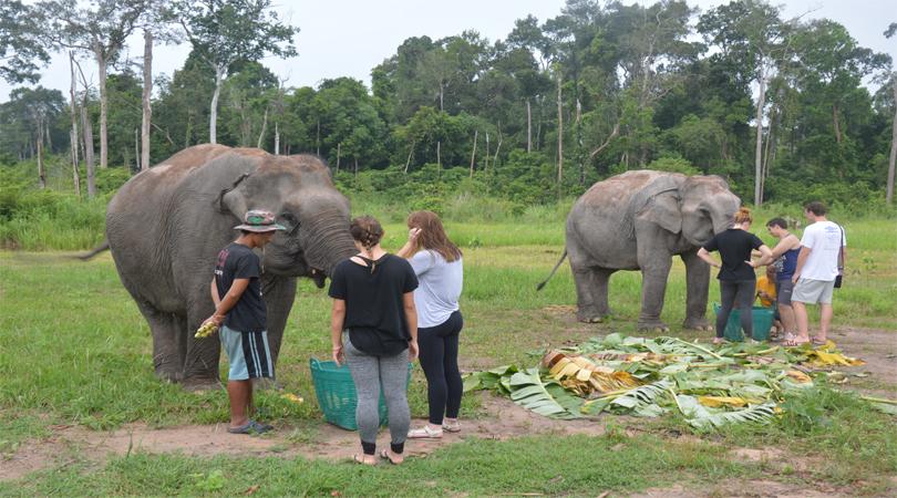 elephant volunteers